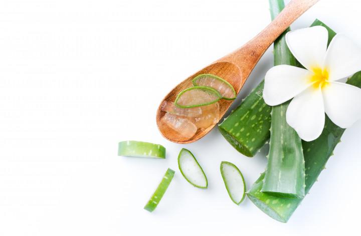 Tren Konsumsi Aloe Vera sebagai Serat Alami